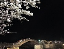 桜の終わり。「18歳、新星」現る!